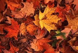 leaf mould – nature's restorer