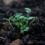 The soil revolution